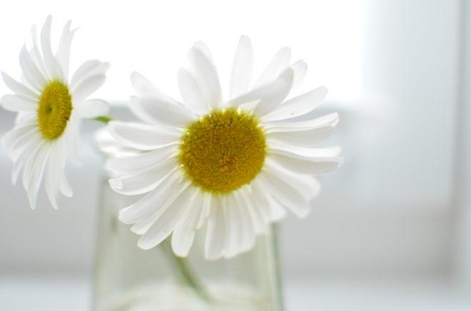 Blumen brauchen Wasser zum wachsen
